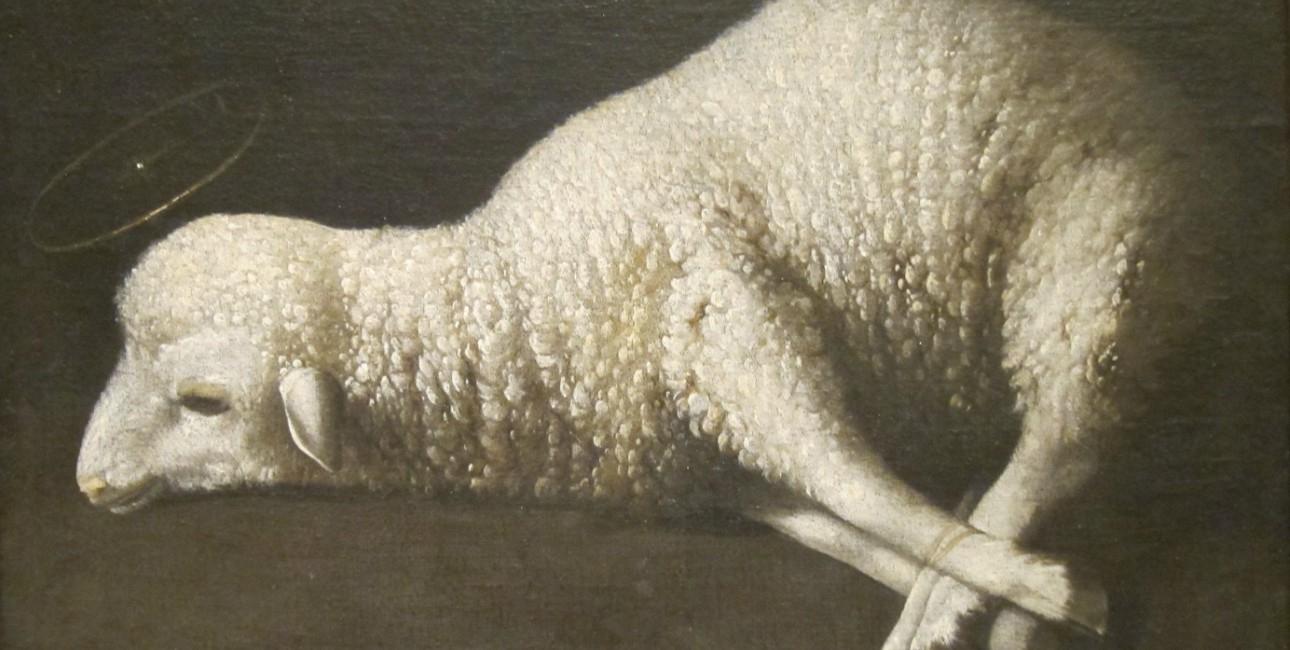 """Jesus blev beskrevet som offerlammet. Udover får og lam blev også okser, geder og duer brugt som offerdyr, fortæller Anne Katrine Gudme. Maleriet kaldes """"Agnus Dei"""" eller Guds Lam og er malet af Francisco de Zurbaran. Foto: Wikimedia Commons."""