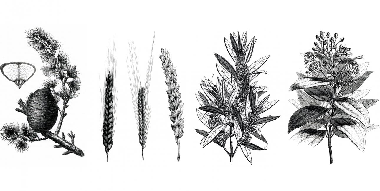 Studiematerialet Livets træ består af fire dele. Hver del er udsmykket med en smuk plante. På billedet ses alle fire planter.