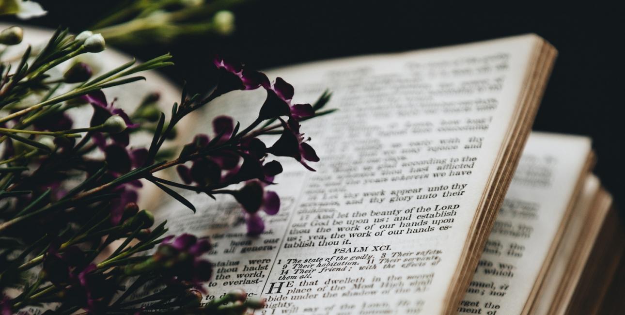 Bibelen er fuld af dufte, der kan pirre vores sanser. Foto: Unsplash.