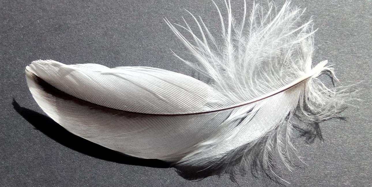 Engle er traditionelt blevet gengivet med fuglelignende vinger af fjer. Foto: Pixabay.
