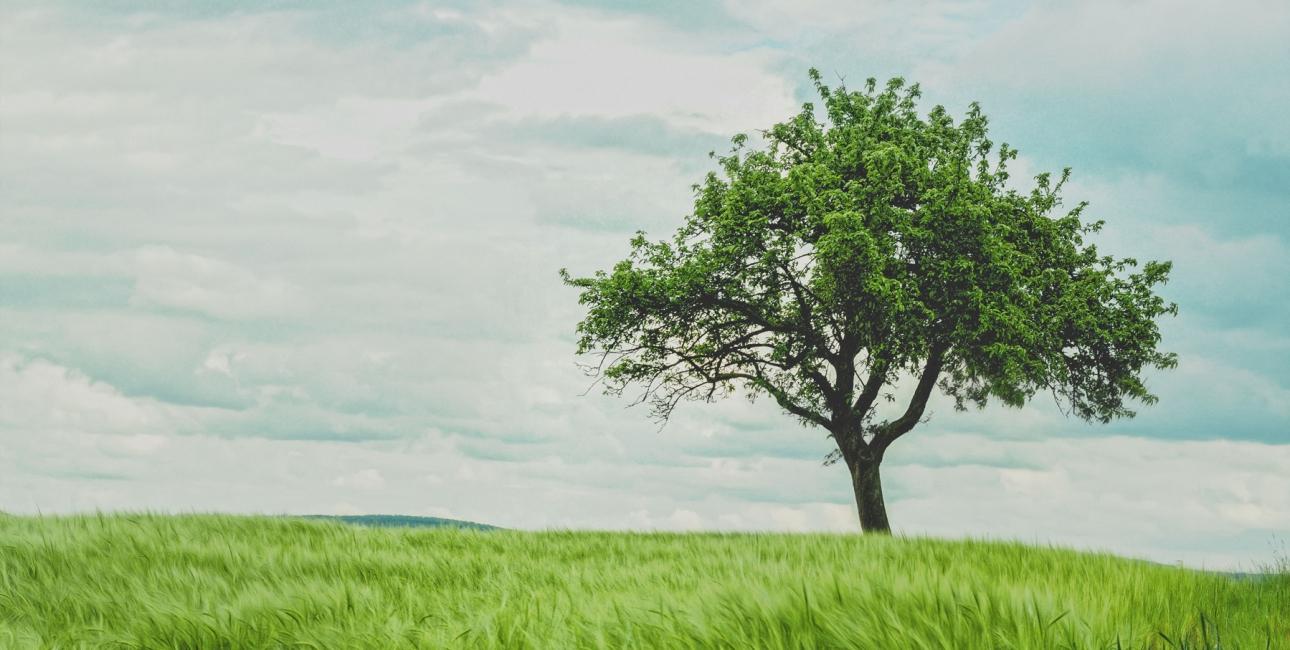 Træ. Foto: Unsplash.