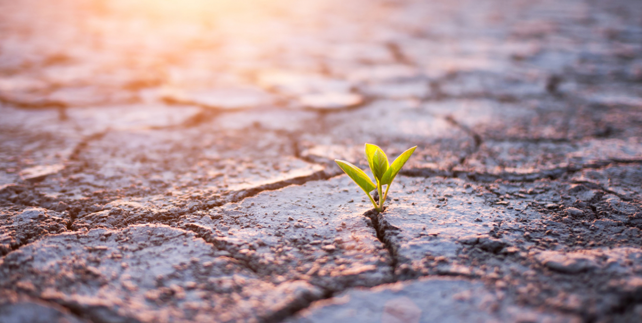 Spire i ørken. Foto: Shutterstock.